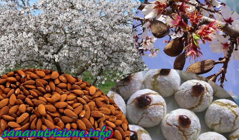 Mandorle un alimento buono sano e ricco di proprietà