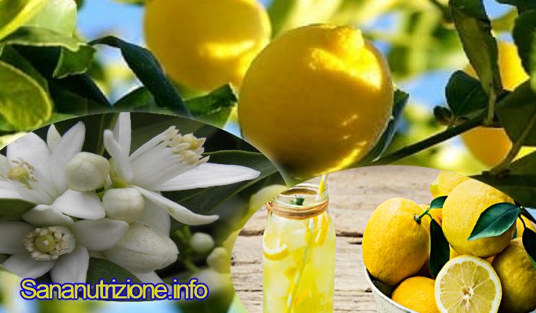 Il limone i suoi benefici per il controllo del peso