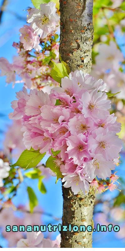 primavera-e-nutrizione