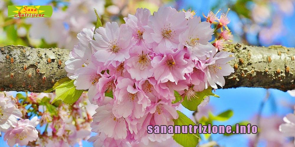 Cibo  Nutrizione e Primavera