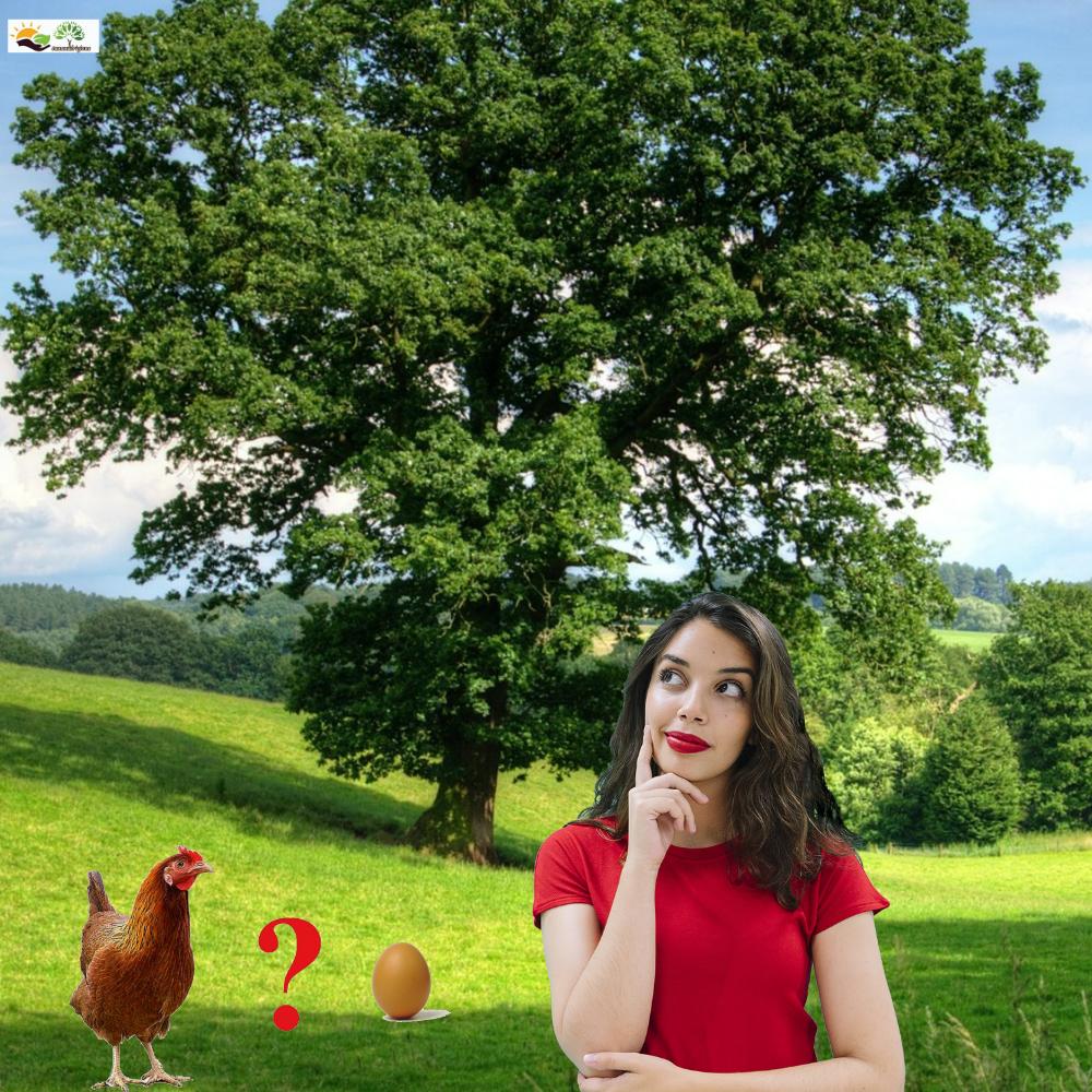 uovo-o-o-gallina