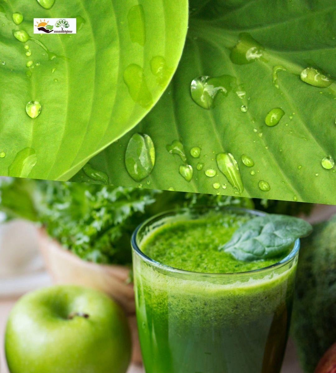 verde e benessere